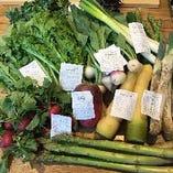 産地直送の野菜たち