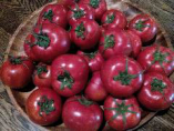 千葉県いすみ市の農家石野さんの作るトマトです!
