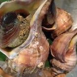 北海つぶ貝