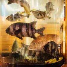 最大36名様迄!活魚と北海道食材宴会