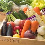 千葉県を中心に仕入れる野菜【千葉県を中心】