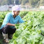 徳島県の美味しい野菜(南風ベジタブル)【徳島県】