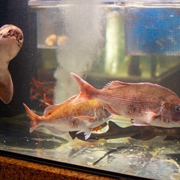 店内には新鮮なお魚が優雅に泳ぐ生簀を完備