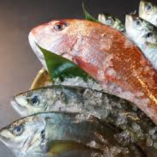 漁港直送!新鮮な海鮮食材の数々!【高知、愛媛、徳島、山口、和歌山ほか】