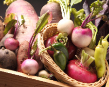 完全農薬不使用こだわり野菜