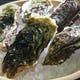 ◆旬な時期には生牡蠣も仕入