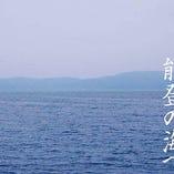 天然の生け簀「七尾港」などの漁港から入荷する鮮魚【石川県】