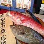 土佐清水港より直送の鮮魚【高知県】