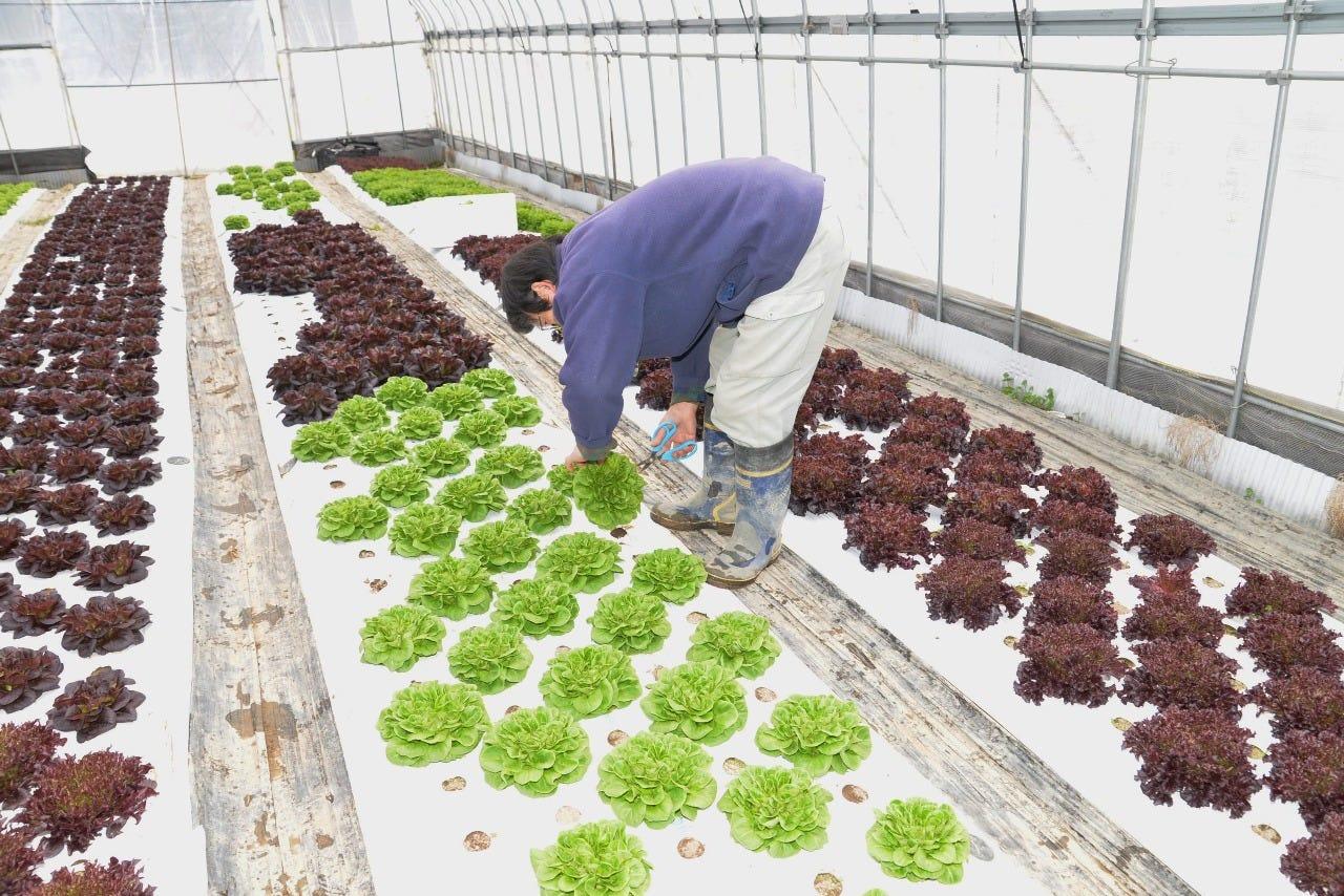 農家直送の新鮮野菜!包み野菜も旨い