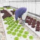 サムギョプサルの包み野菜も厳選!農家直送の新鮮野菜有り♪