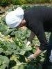 秋山農園の京一さんが育てる野菜【千葉県船橋市】