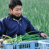 農家さんが丹精こめて育てた「京野菜九条ねぎ」