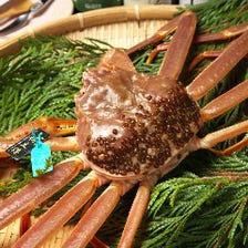 新鮮な橋立産ずわい蟹