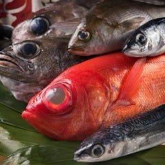 魚肴酒場よし乃 後楽園