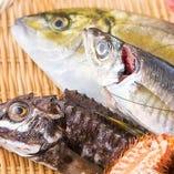 毎日仕入れる新鮮魚介!