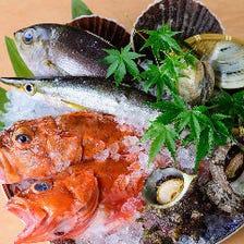 九州の海の幸に舌鼓♪毎日入荷の鮮魚
