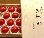 フルーツトマト【きわめ】【愛知県幡豆郡】