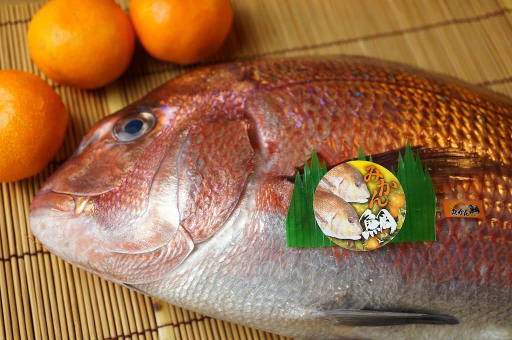愛媛・みかん鯛