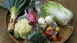 千葉県松戸市から直送の旬野菜【千葉県松戸市】