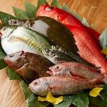 旬の新鮮な魚を仕入れ、刺身、煮付け、西京焼でお出ししています。