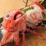 【最高級きんき!!】高級魚きんきのお造り!