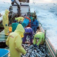 毎日届く新鮮魚介