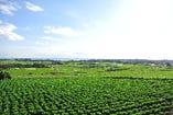 広大な契約農家さんの畑!!ここから新鮮な無農薬野菜がお客様の元へ!!