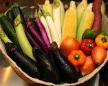 三浦・横須賀地野菜! 契約農家さんの愛情と想いがたっぷり!
