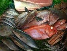 沼津港直送の新鮮な魚