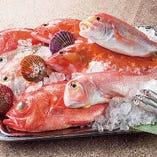 産地直送鮮魚【高知県】