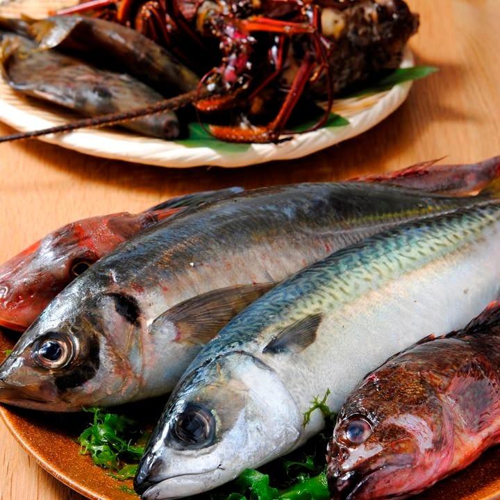 ◆毎日漁港から届く、新鮮直送鮮魚