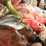 築地直送の鮮魚【東京都】