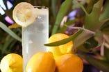 【生搾りレモンサワー】フレッシュレモンでさっぱり♪