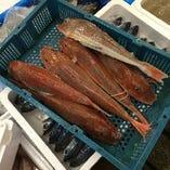 築地直送!鮮魚!(写真はほうぼう)【長崎県が比較的多い。全国より来ます。】