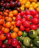 おかざき農園さんのフルーツトマト【高知県高知市】