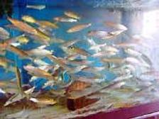 日替わり魚メニューが100種類以上!