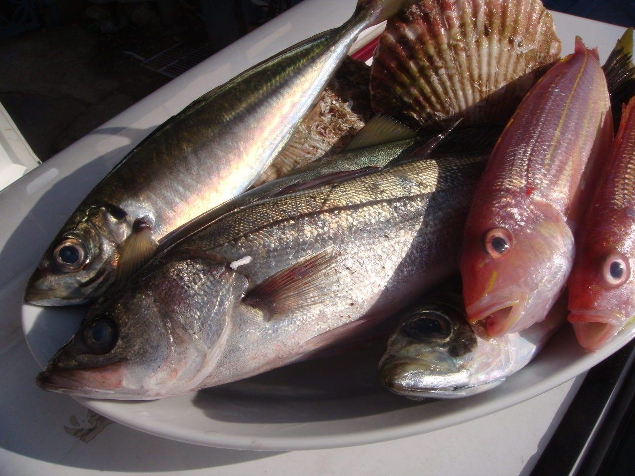 地元食材の鮮魚