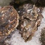 島根の岩牡蠣 「珠自慢」 【島根県】