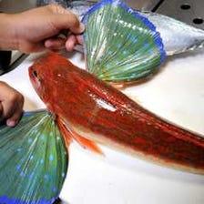 朝採れ、さばきたて、地魚刺し盛り