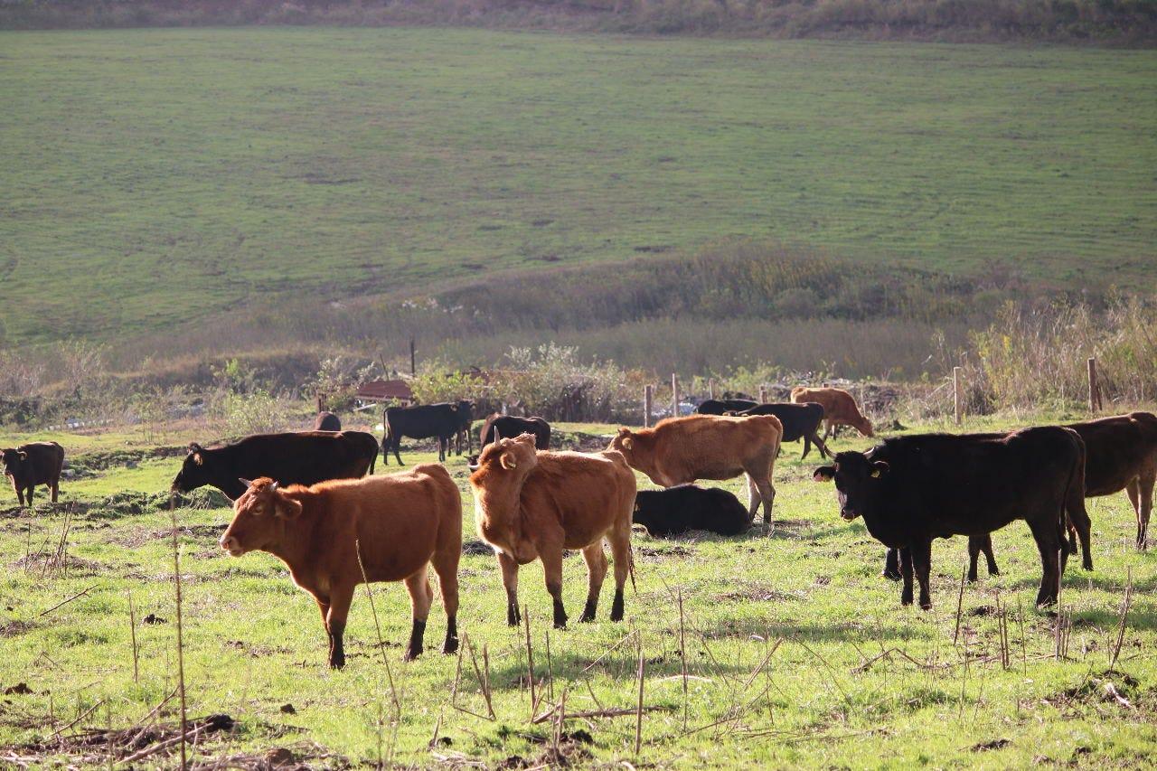 阿蘇地方の豊かな草資源で育つ