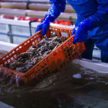安心安全の生牡蠣を全国各地から入荷