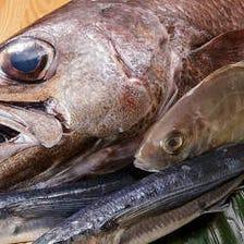 高知県『土佐清水』から漁港直送