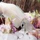 生簀より取り出される新鮮な【呼子活烏賊】 後造りの天婦羅付き