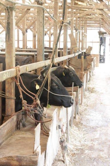 牛屋‐鐵‐  こだわりの画像