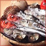 築地直送 鮮魚【築地市場】