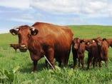 放牧地でのびのび健康的に育てられたいわいずみ短角牛【岩手県下閉伊郡岩泉町】