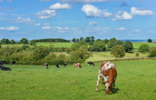 牧草牛の素晴らしい栄養価