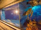 生け簀から引き揚げる 新鮮な魚料理をお楽しみ下さい。