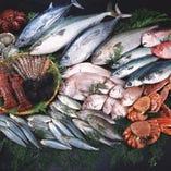 市場から直接仕入れる鮮魚【高知県】