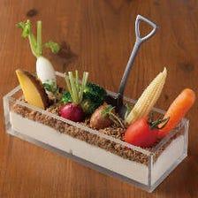 こだわり野菜と食べれる土のファーマーズサラダ